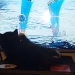 【猫じゃらし】メインメニューのカーソルに夢中な猫