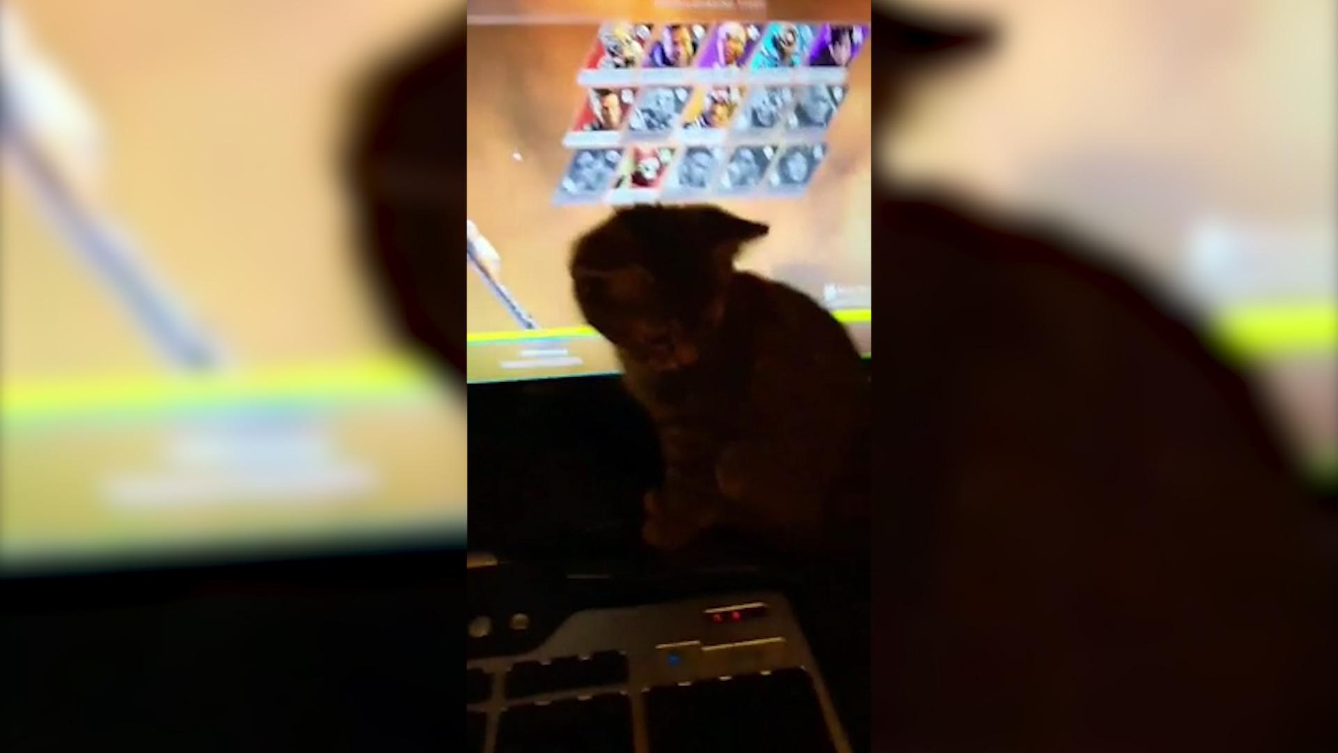 【APEX】プレイ中に邪魔してくる猫が可愛すぎるwww