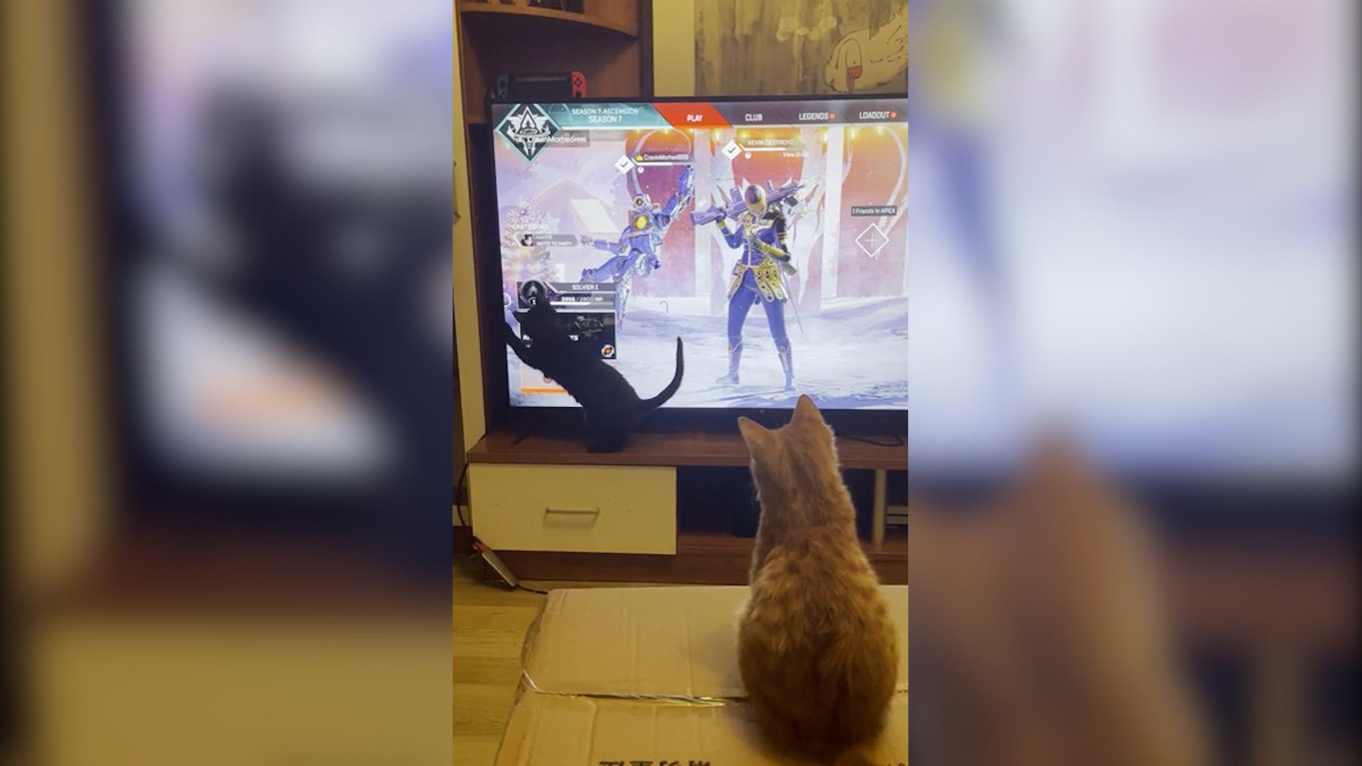 APEXファン「ロビー画面のカーソルで猫と遊んでみた」